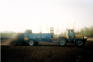 Spreading compost at the Millennium Dome 1999